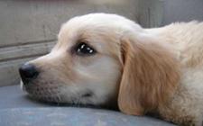 <b>狗狗发烧怎么办?狗狗发烧怎么治疗?</b>