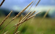 <b>农业众筹为农业各行业提供新机遇 蹄疾步稳的更好服务三农</b>