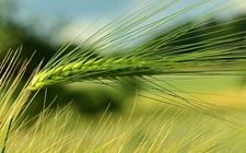 支持农民工等人员返乡创业 推进一二三产业融合发展现代农业