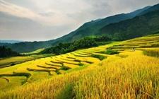 促进农产品加工业转型升级 推进农业绿色发展