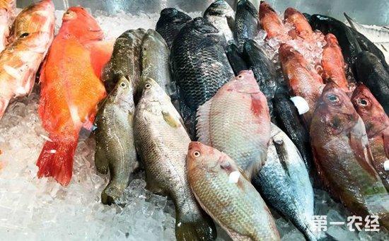 海鱼真的比河鱼更营养更安全?专家:切莫将其分出三六九等