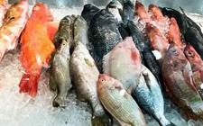 <b>海鱼真的比河鱼更营养更安全?专家:切莫将其分出三六九等</b>