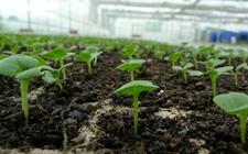 <b>蔬菜苗期病害怎么治?蔬菜苗期常见生理性病害的原因及防治</b>