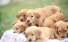 <b>母犬难产怎么办?如何处理难产的狗狗?</b>