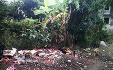 农业部:到2020年90%农村生活垃圾有望得到处理