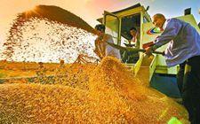 <b>农业部余欣荣:加快推进种业等基础性国家工程建设 保障国家粮食安全</b>