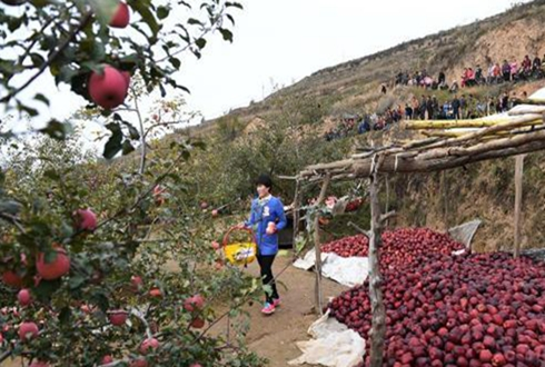 """清水苹果""""触网""""走出大山"""