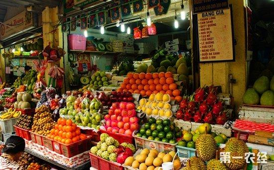 越南盼通过增加果蔬出口消除贫困