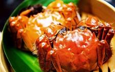 秋季大闸蟹食用正当时 勿多食且勿与啤酒共食用