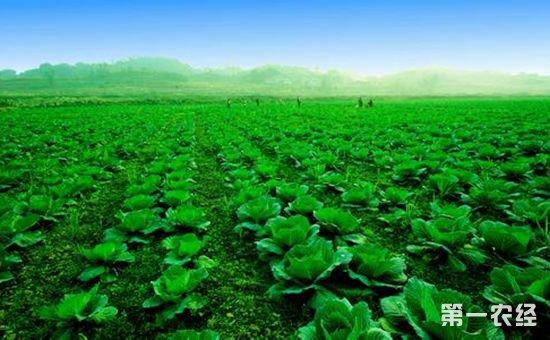 农业部张天佐解读《关于创新体制机制推进农业绿色发展的意见》