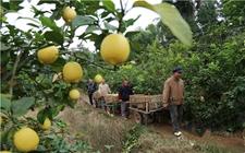 重庆柠檬节农村电商峰会举行 专家齐聚探讨电商发展