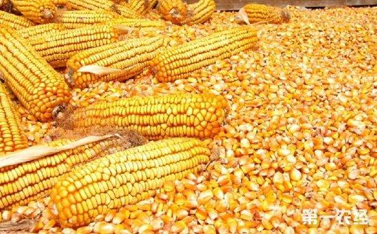 菲律宾农业民生报告:种植收入降低食品支出提高