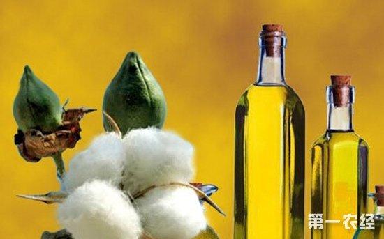 11月07日全国各主产区棉籽棉油棉粕价格行情