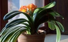 10种具有很好加湿效果的盆栽植物介绍!秋冬季节少不了的天然加湿器