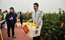 """重庆市举办""""汇达杯""""农民柠檬采收运动会"""