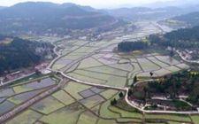 研究称优化作物分布可实现可持续性农业集约化