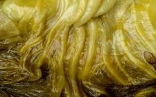 山东:食用咸菜后口唇紫绀头晕乏力 确诊为急性亚硝酸盐中毒