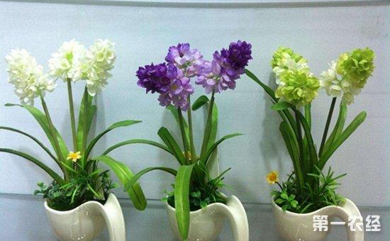 7种超耐寒的盆栽植物介绍!天冷养护不费心