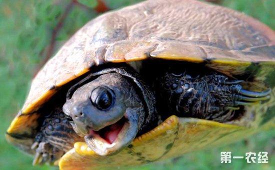 乌龟窝的制作图片大全