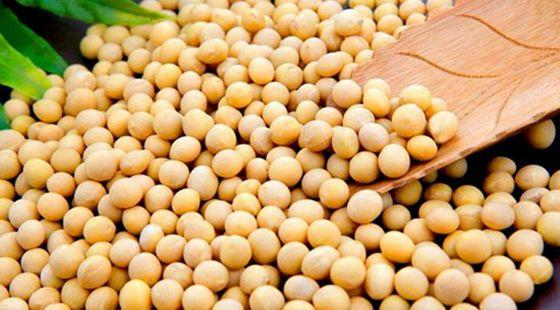 今年东北大豆整体质量良好 收购价格趋弱
