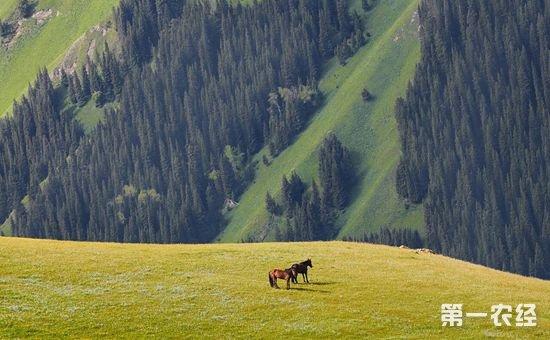 天津援疆:助推农牧民增收 打赢脱贫攻坚战