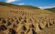 """吉林:政策""""加码""""支持秸秆综合利用 为农作物秸秆找出路"""
