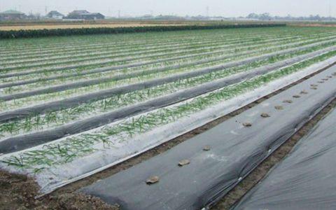 甘肃省着力推动废旧地膜回收 有力推动重点用膜地区农村环境的改善
