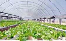 广东:加快实施乡村振兴战略 大力支持设施农业休闲农业发展