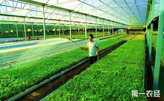 河北廊坊坚持把节水高效作为高标准农田建设重要标准