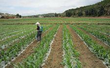 <b>农村土地有偿退出补贴 每亩地最高可以拿到10万元</b>
