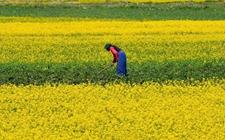 90后达瓦顿珠:菜籽油加工带动乡亲脱贫致富奔小康