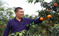 钟寒斌:心系家乡带头致富 柑桔产值达250余万