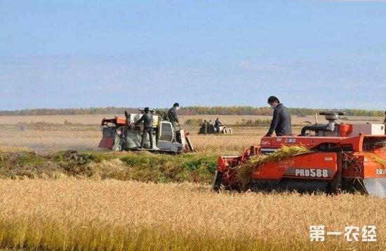 2017年11月9日黑龙江辽宁等地新季水稻价格