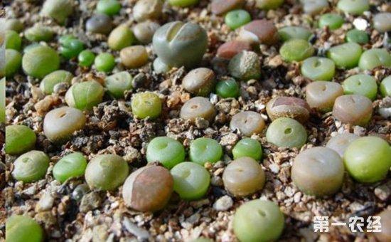 9种适合养在办公室里的盆栽植物介绍!净化空气清新自然