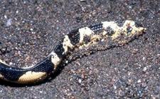 海蛇的种类有哪些?海蛇的种类图片大全