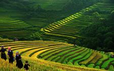 农业部张桃林:以实施乡村振兴战略为总抓手 完善农业支持保护制度
