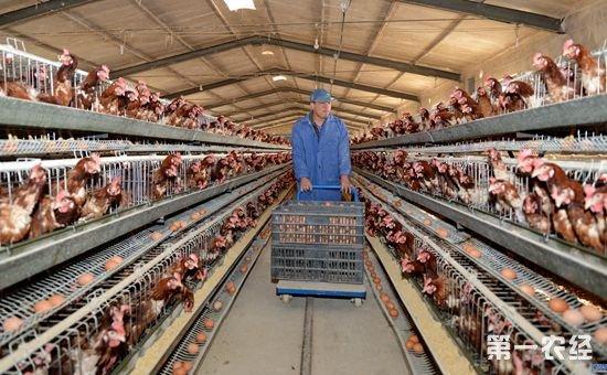 2017年国家养殖重点补贴对象!你符不符合条件