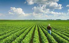 美国大豆行业已与中国进口商签署了两份意向书 中国将加大购买力度