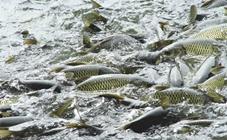 <b>淡水鱼有哪些常见疾病?淡水鱼三大疾病的防治方法</b>