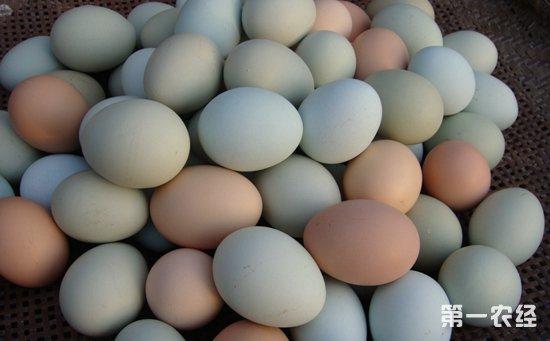 受货源和走货量减少影响    市场蛋价罕见连续稳定局面