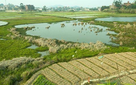 农民们该如何应对农村土地改革?