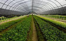《关于加强政策体系建设促进新型农业经营主体发展的实施意见》发布