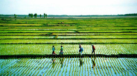 中国农业品牌创新联盟正式成立