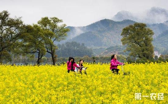 叶兴庆:我国实施乡村振兴战略需解决好三大结构性问题