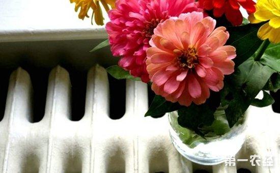 10种养花人不得不知的养花技巧介绍!花开满屋香溢满院
