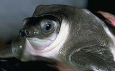 世界上最丑的动物有哪些?盘点世界十大最丑的动物