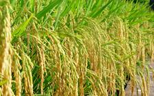2018年十项农业补贴将发生新变化 快来看看!