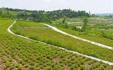 如果自家的土地没有确权 以后还能继续耕种吗?