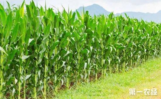 突出种性安全 《主要农作物品种审定标准(国家级)》修改解读