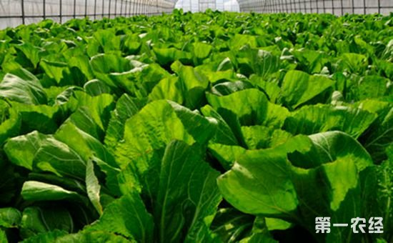 黑龙江省:积极构筑绿色食品标准体系 扎实开展农业标准精准服务